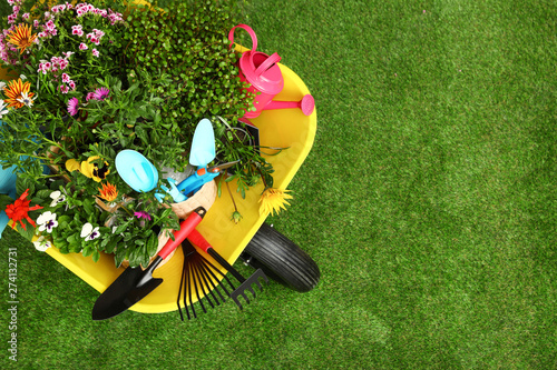 Poster Tuin Wheelbarrow with flowers and gardening tools on grass, top view. Space for text