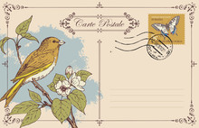 Vector Greeting Card Or Retro Postcard With Postage Stamp And Hand-drawn Bird On Branch Of Flowering Tree. Romantic Vector Card In Vintage Style With Place For Text And Postmark In Frame With Curls