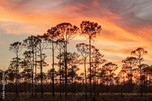 Sunset Jonathan Dickinson State Park 09