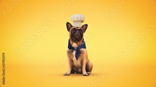 Photographie dog chef cook. 3d rendering