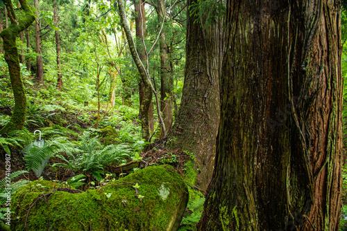 Door stickers Forest river 兵庫県・苔むす渓谷、小代地区の風景