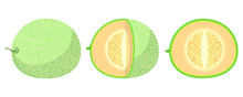 Cantaloupe Fruit Vector Design...