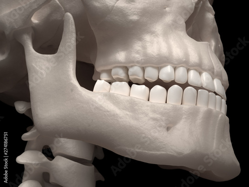 Human jaw and teeth Canvas-taulu