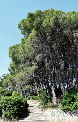 Spoed Foto op Canvas Grijze traf. trees