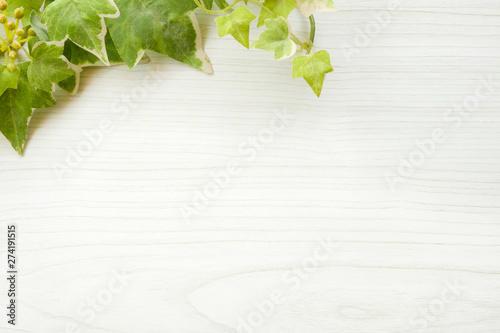 背景素材 白木 バックグラウンド ホワイト グリーン 葉っぱ Canvas Print