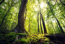 Lebensraum Wald - Sonnenschein Im Harzer Buchenwald