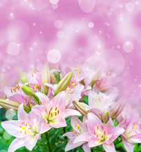 Pink Lilies On Fairy Pink Background