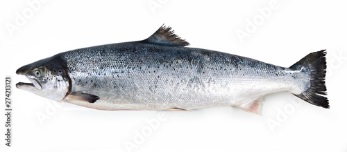 Foto salmon fish isolated on white background