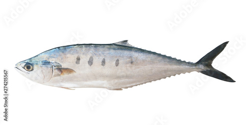Fotografie, Obraz Raw talang fish isolated on the white background