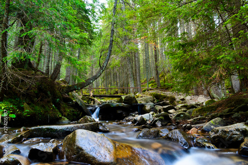 Wall Murals Forest river Water running down a river with stones. Carpathians, Ukraine