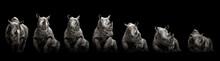 Moving Rhino Monochrome