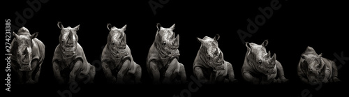 Spoed Foto op Canvas Neushoorn Moving rhino monochrome