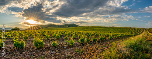 Panoramic view of a vineyard in Spain during a summer day sunrise - Image Canvas