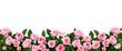 Pink rose flowers in a border arrangement