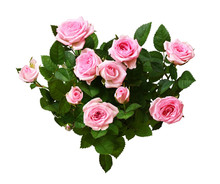 Pink Rose Flowers In A Heart S...