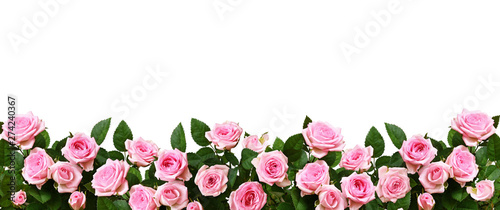 Pink rose flowers in a border arrangement
