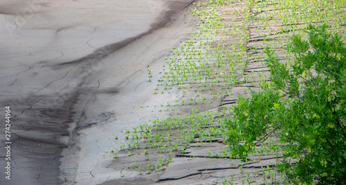 Fotografija Mud streams after a heavy rain on a cornfield that destroyed part of the crop ar