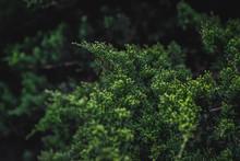 A Flowerless Plant