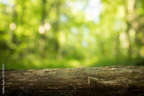 Fotografia, Obraz Tree trunk in the forest: Close up picture, blurry green background