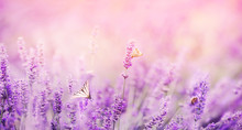 Banner Purple Lavender Field W...