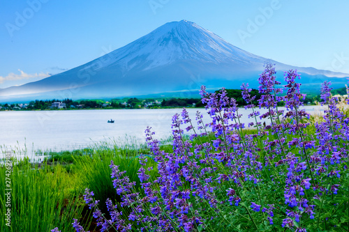 Poster Green lavender flower field in the garden beside fuji mountain ,Japan