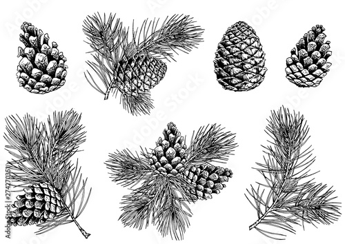 Obraz Pine branches and cones. Hand drawn vector illustration. Isolated elements for design. - fototapety do salonu