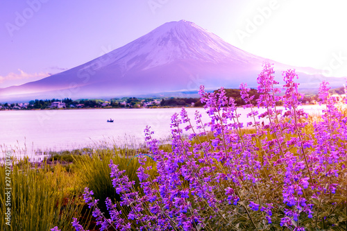Tuinposter Purper lavender flower field in the garden beside fuji mountain ,Japan