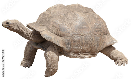 Keuken foto achterwand Schildpad turtle isolated on white background