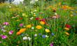 Blumenwiese im Schwarzwald bei Nordrach