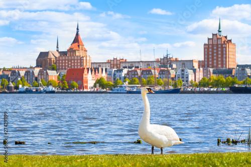 Fotografía Sunny Day at Hanseatic City of Rostock / Swan on riverside at city of Rostock, G