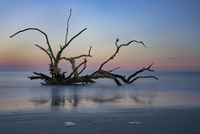 This Is A Color Image Of Driftwood Trees Along The Shore Of Driftwood Beach In Jekyll Island, Georgia.