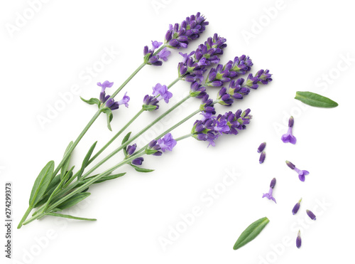Lavender Flowers Isolated On White Background Canvas Print