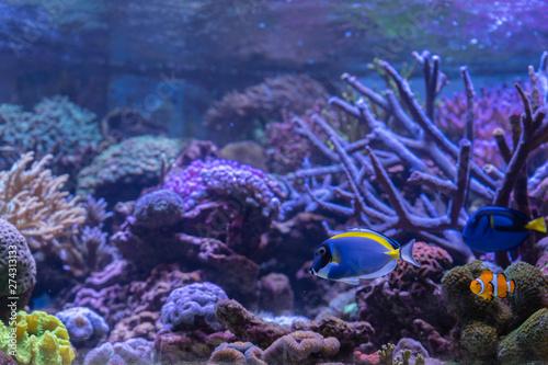 Poster Coral reefs Carnas, France - 06 10 2019: Beautiful aquarium in salt water