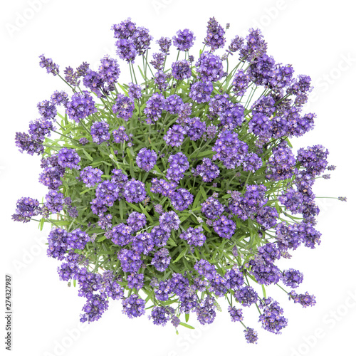 Fresh lavender flowers bouquet white background Top view Wall mural