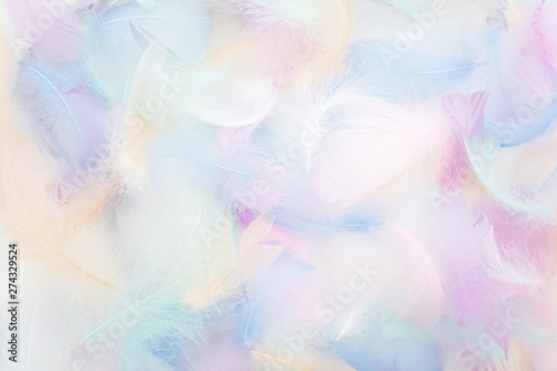 abstract nackground with soft colorfull feathers. Flat lay - 274329524