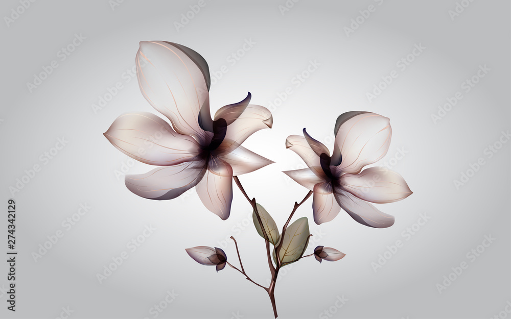 Fototapety, obrazy: dry white orcid on the white background