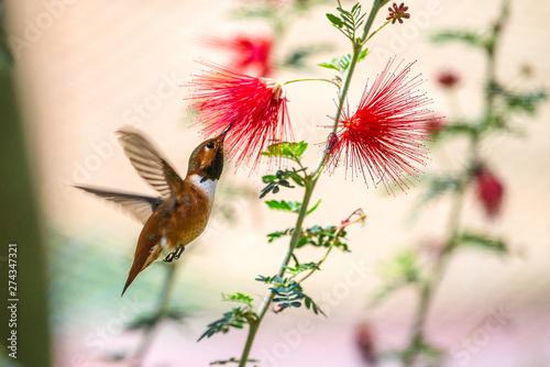 Photo  hummingbird in flight
