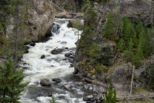 View Of The Gibbon River In Yellowstone National Park