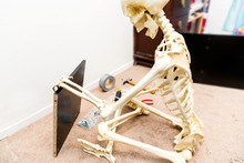 Bony Skeleton Assembling A Black Wooden Shelf