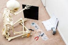 Bony Skeleton Assembling A Bla...