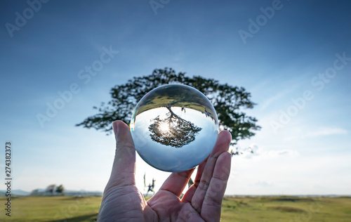 Poster de jardin Arbre big tree in crystal ball.