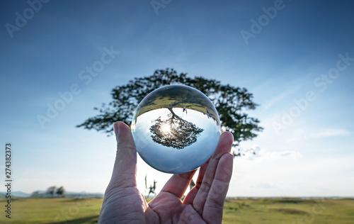 Poster Bomen big tree in crystal ball.