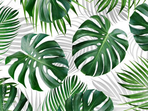 Fototapeta Tropical leaves pattern background design of monstera and yellow palm Summer banner obraz na płótnie