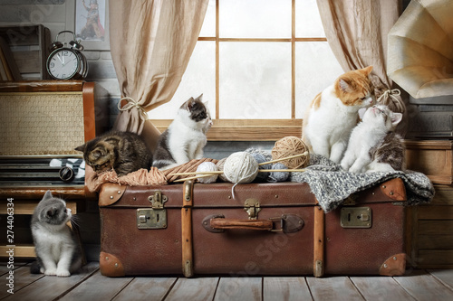 Group of small striped kittens on a suitcase by the window