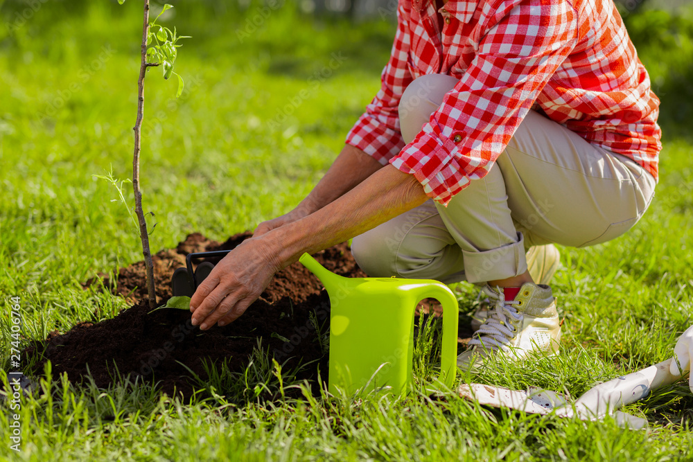 Fototapety, obrazy: Close up of female hands digging ground after watering tree