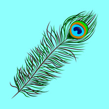 Vector Image Of Peacock Feather