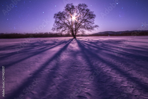 Spoed Foto op Canvas Aubergine ハルニレの木