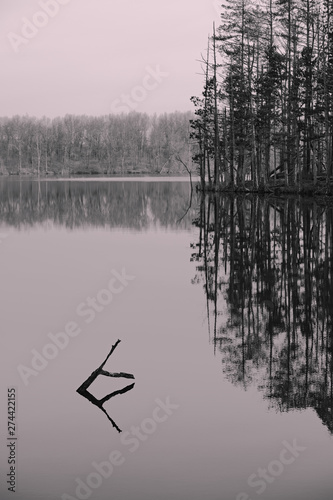 Fotografie, Obraz  reflection of trees in lake