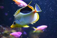 Tropical Fish In Aquarium, Ber...