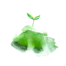 Sprout In The Grass.Spring Picture.Watercolor Hand Drawn Illustration.White Background.